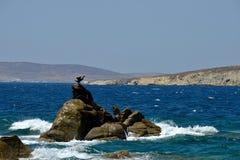 Zeegezicht met een aalscholver met open vleugels die zich op een rots in het midden van het overzees bevinden royalty-vrije stock afbeelding