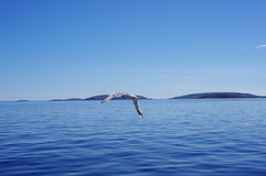 Zeegezicht met een vliegende zeemeeuw Royalty-vrije Stock Afbeelding