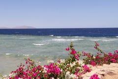 Zeegezicht met heldere bloemen in de voorgrond Stock Foto