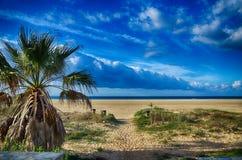 Zeegezicht met strand en palmen Royalty-vrije Stock Foto's