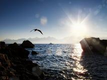 zeegezicht met zonnestraal en zeemeeuw royalty-vrije stock fotografie