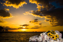 Zeegezicht van de zonsondergang het op zee avond, gele wildflowers, oesterbed royalty-vrije stock afbeeldingen