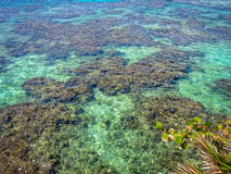 Zeegezicht van het blauwe turkooise duidelijke tropische oceaanwater en de ertsader Het eiland van Roatan, Honduras Stock Foto