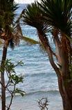Zeegezicht van tropische baai met palmenportret royalty-vrije stock afbeelding