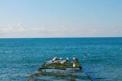 Zeegezicht Zonnige dag De Zwarte Zee royalty-vrije stock afbeeldingen