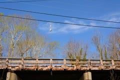Zeekreeftboeien die op telefoondraad hangen boven houten brug Stock Fotografie