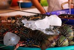 Zeekreeften stock foto
