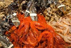 Zeekreeften, garnalen en rivierkreeften Stock Afbeelding