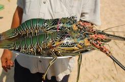 Zeekreeften op het Dienblad Stock Afbeeldingen