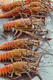 Zeekreeften voor verkoop bij zeevruchtenmarkt Royalty-vrije Stock Afbeeldingen