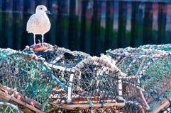 Zeekreeftpotten op het dok, Engeland stock afbeeldingen