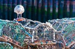 Zeekreeftpotten op het dok, Engeland stock fotografie