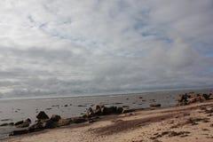 Zeekust Royalty-vrije Stock Foto
