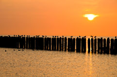 Zeeland seagulls på en linje av pir på skymningen Royaltyfri Foto
