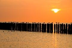 Zeeland-Seemöwen auf einer Zeile des Piers an der Dämmerung Lizenzfreies Stockfoto