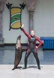 Zeeleeuw en trainer Stock Afbeeldingen