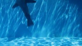 Zeeleeuw in pool stock videobeelden