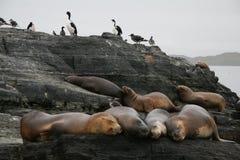 Zeeleeuwen en aalscholvers Royalty-vrije Stock Afbeeldingen