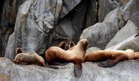 Zeeleeuwen in het Kenai-Fjorden Nationale Park, Alaska stock fotografie