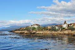 Zeeleeuwen op Brakkanaal Stock Fotografie