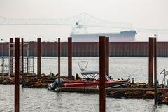 zeeleeuwen op dok met boten in mist royalty-vrije stock afbeeldingen