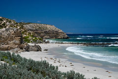 Zeeleeuwen op het strand Royalty-vrije Stock Afbeelding