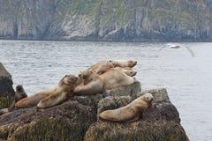 Zeeleeuwen op rots stock foto's