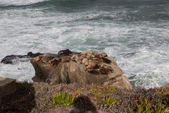 Zeeleeuwen op steen in San Diego Royalty-vrije Stock Afbeelding