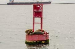 Zeeleeuwenknuffel op een Boei in de Long Beach -Haven royalty-vrije stock fotografie