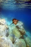 Zeeleeuwstier onderwater zwemmen Royalty-vrije Stock Foto's