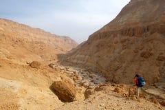 Zeelim峡谷在犹太沙漠 库存照片
