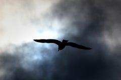Zeemeeuw in bewolkte hemel Royalty-vrije Stock Foto