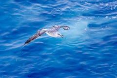 Zeemeeuw bij de oceaan Stock Foto