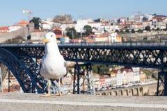 Zeemeeuw bij Douro-rivier en Ribeira van daken in Vila Nova de Gaia, Porto, Portugal Stock Afbeelding