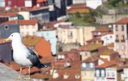 Zeemeeuw bij Douro-rivier en Ribeira van daken in Vila Nova de Gaia, Porto, Portugal Royalty-vrije Stock Foto's