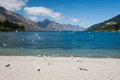 Zeemeeuw bij LakeWakatipu meer, Nieuw Zeeland Stock Foto's