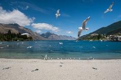 Zeemeeuw bij LakeWakatipu meer, Nieuw Zeeland Royalty-vrije Stock Foto's