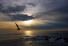 Zeemeeuw bij Zonsondergang Stock Fotografie