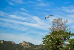 Zeemeeuw in de blauwe groene bomen van de hemelberg Stock Afbeelding
