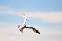 Zeemeeuw in de blauwe hemel met wolken Royalty-vrije Stock Foto