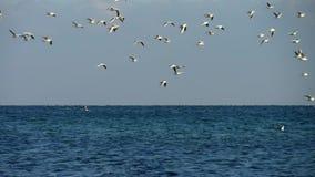 Zeemeeuw die boven overzees met achtergrond van blauwe stormachtige overzees en grijze hemel vliegen stock video
