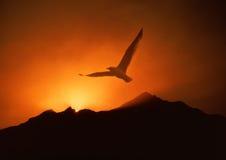 Zeemeeuw die boven zonsopgang stijgt Royalty-vrije Stock Foto's