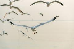 Zeemeeuw die in de blauwe hemel vliegen Royalty-vrije Stock Fotografie