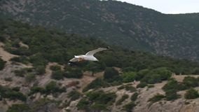 Zeemeeuw die in de hemel vliegen stock footage
