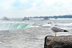Zeemeeuw die het Niagara Falls bekijkt stock foto