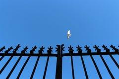 Zeemeeuw die hoog vliegen Royalty-vrije Stock Afbeelding