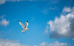 Zeemeeuw die met blauwe skys en witte wolken vliegen Stock Fotografie