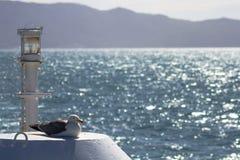 Zeemeeuw die met overzees en bergen bokeh achtergrond rusten stock fotografie