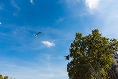 Zeemeeuw die onder een glanzende zon vliegen royalty-vrije stock foto