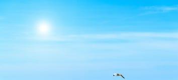 Zeemeeuw die onder een glanzende zon vliegen stock foto's